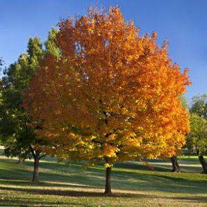 Autumn in Kent, Connecticut